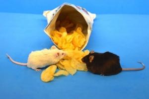 mouse diet